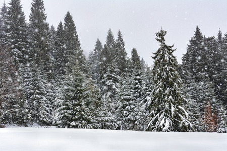 Beautiful winter landscape - snowfall in a mountain forest Stock Photo