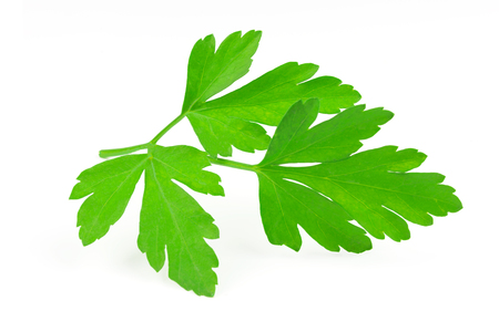 Perfect branch of a fresh parsley isolated on a wahite background in close-up.
