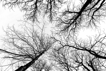 Low angle view of barren trees in the park ( B&W intense effect)