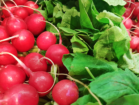 Fresh organic radishes with leaves from the garden, for sale at the farmers market