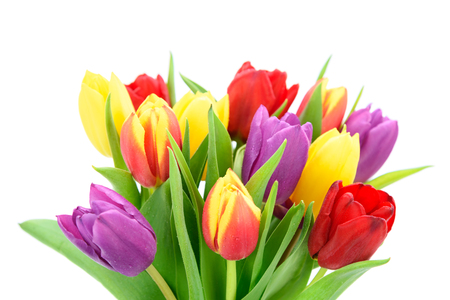 Bouquet of fresh multi colored tulips flowers isolated on a white background in close-up