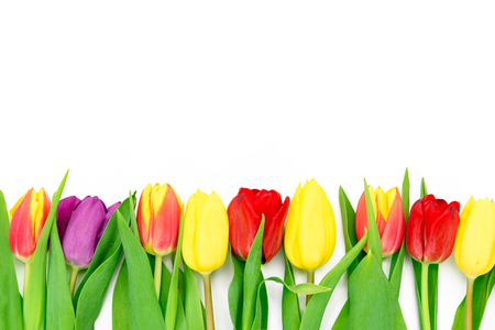 Row of fresh multi colored tulips flowers isolated on a white background with copy space Stock Photo