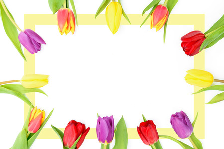 Springtime template - flat view of fresh multi colored tulips flowers in a row on a white background with copy space.