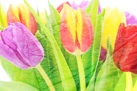 Abstract floral background - bouquet of fresh multi colored tulips flowers (mixed)