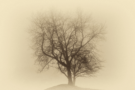 Single leafless tree in a deep fog on a hill ( vintage sepia effect). Stock Photo