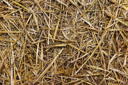 Close up of a straw background texture (high details). Stock Photo
