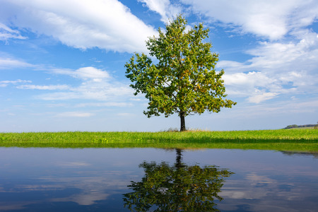 Beautiful lonely oak on the background of blue sky and clouds is reflected in the water of the lake on a sunny day (mixed).