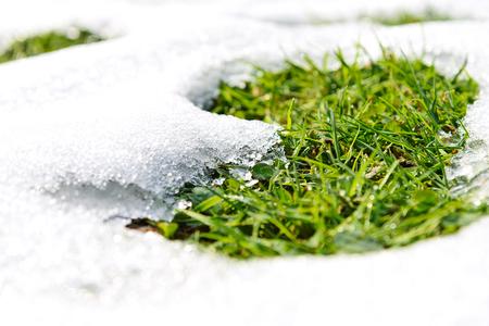 Concept de temps de printemps - fonte des neiges et pousse de l'herbe verte par une journée ensoleillée en gros plan
