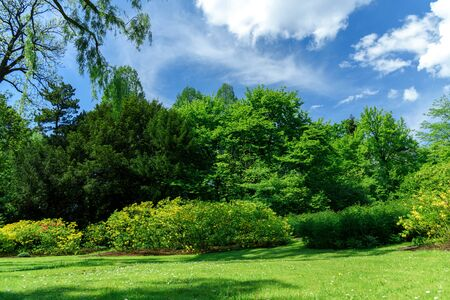 Idyllic nature landscape with vivid springtime colors- green trees and lawn in a public park on a sunny day. Reklamní fotografie