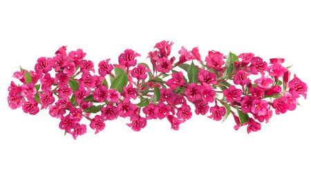 Beautiful blooming red flowers ornate bar isolated on a white background