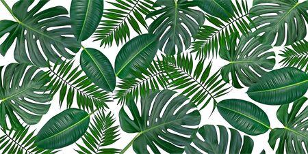 Horizontale Grafikzusammensetzung von trendigen tropischen grünen Blättern - Monstera, Palme und Ficus elastica isoliert auf weißem Hintergrund (gemischt).
