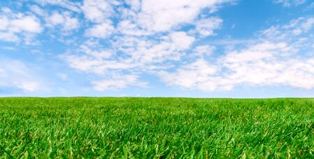 Panoramic agricultural landscape - Idyllic farm field with green grass and cloudy blue sky on a sunny day (copy space).