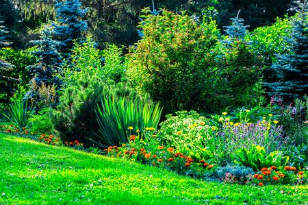 Landscape of a beautiful home garden with green lawn and blooming flowers in the morning sun