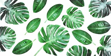 Digital art painting - horizontal canvas composition of trendy tropical green leaves - monstera and ficus elastica isolated on white background (water color effect).