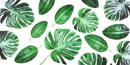 Pintura de arte digital - composición de lienzo horizontal de hojas verdes tropicales de moda - monstera y ficus elastica aislado sobre fondo blanco (efecto de color de agua). Foto de archivo