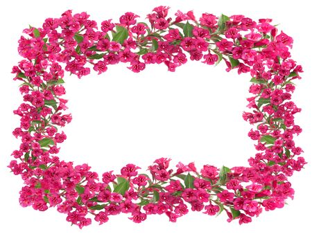 Composite image of beautiful blooming red flowers frame isolated on a white background with copy space.