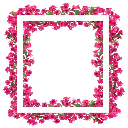 Composite image of beautiful blooming red flowers advertisement frame or banner isolated on a white background with copy space.