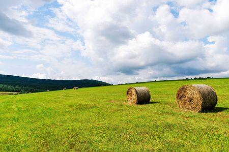 Krajobraz rolniczy - idylliczne pole uprawne z belami siana w słoneczny dzień