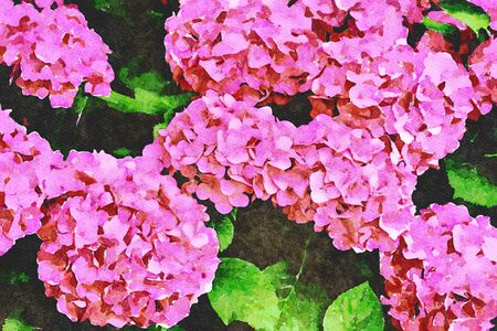 Digital art painting canvas - bush of beautiful blooming pink Hydrangea flowers in the garden (watercolor effect) Banco de Imagens