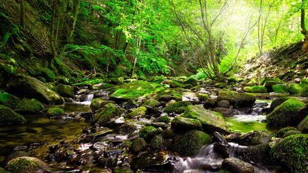 Picturesque mountain stream in a deep spring forest - Magurski National Park in Carpathian Mountain Range.