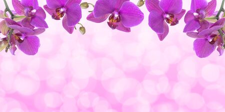 Wide advertisement banner template -  beautiful pink orchid flowers with bokeh lights ideal for your project (mixed)