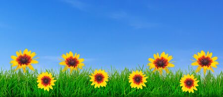 Natural green grass meadow with yellow flowers on a blue sky background with copy space ( mixed)