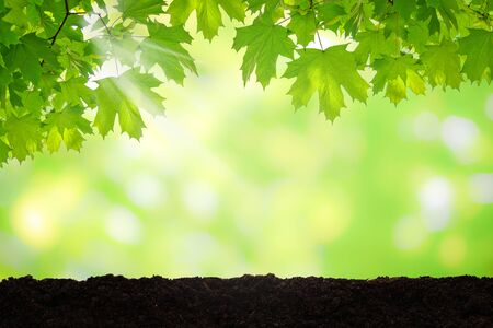 Natural spring background - fresh green leaves of clone over brown soil on a sunny day with copy space