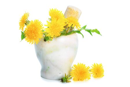 Concept of an alternative medicine - fresh yellow Dandelions in the marble mortar isolated on a white background