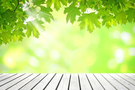 Natural springtime template - fresh green leaves of clone over empty wooden vintage table on a sunny day with copy space Stock Photo