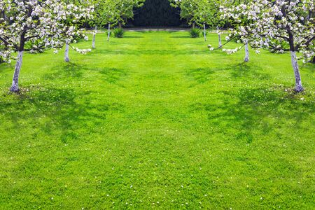 Natural green grass lawn with fruit trees in the spring garden (copy space) Stock Photo