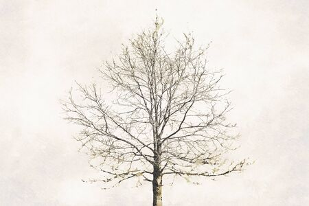 Digital art painting canvas - sepia toned image of a separate oak tree (watercolor effect) Stock Photo