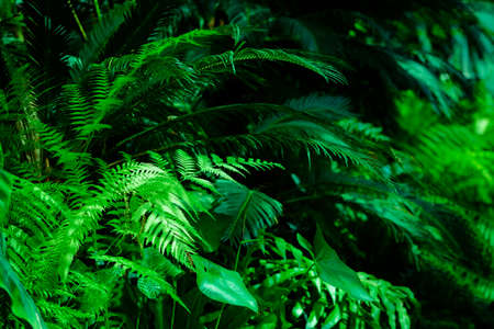Green dark toned image of tropical bush foliage - ideal for trendy wall canvas decoration. Stockfoto