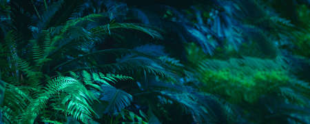 Wide floral background - trendy green dark toned image of tropical bush foliage.
