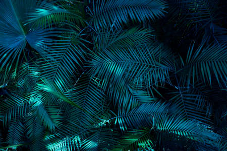 Green dark toned image of tropical bush foliage - ideal for trendy wall canvas decoration ( cinematic color grading)