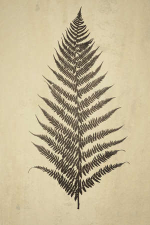 Composite image in retro style of a fern leaf on a grunge vintage background. Ideal for print canvas home decoration.