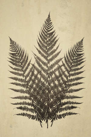 Composite image in retro style of fern leaves on a grunge vintage background. Ideal for print canvas home decoration. Stockfoto