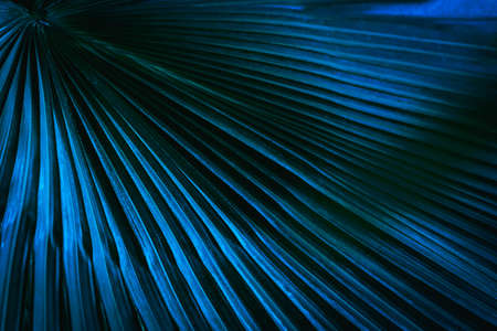 Green toned full frame image of trendy tropical palm leaf  in close-up Stockfoto