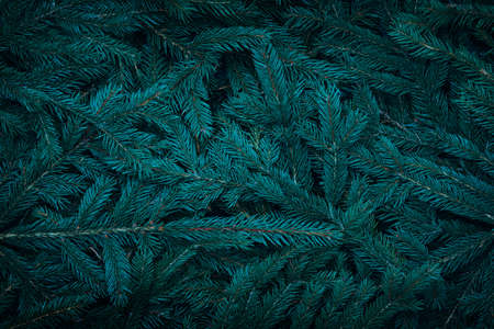 Green dark toned image of coniferous tree branches - ideal for trendy natural background decoration ( cinematic color grading)