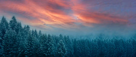 Picturesque wide winter panorama of Carpathian Mountains at sunrise in an early morning (cinematic color grading)