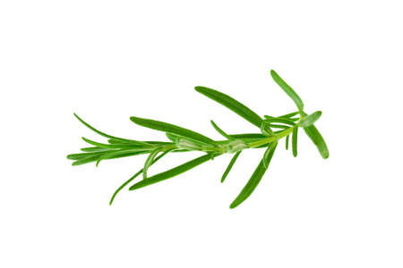 Close-up of a fresh rosemary twig isolated on a white background. Stock fotó