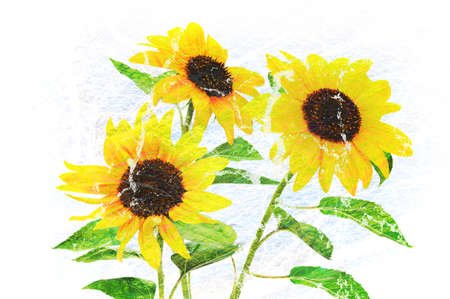 Trendy home wall art decoration - multilayered creative mixed image of three beautiful yellow sunflowers.