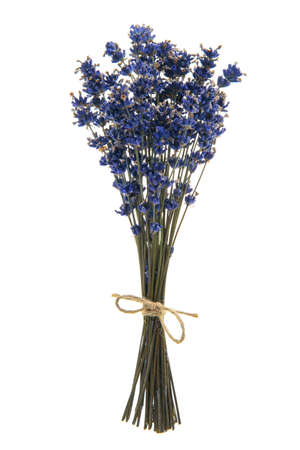 Bouquet of dried lavender flowers tied with a burlap twine on a white background Standard-Bild