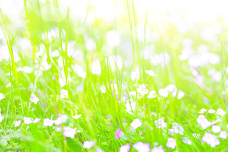 Beautiful bright summer background - soft focus image of wild flowers on a green meadow with bokeh backlight. High resolution image ideal for interior decoration in Healing by Nature Fine Art Design Style.