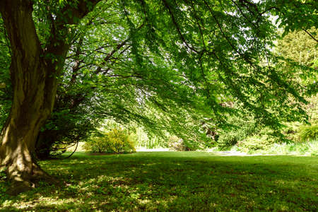 Old tree in the public park on a sunny summer day. High resolution image ideal for interior decoration in  Healing by Nature Fine Art Design Style. Stock Photo