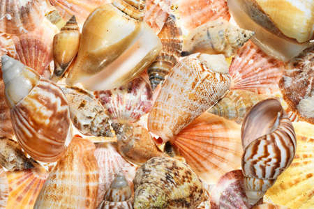 Full frame abstract aquatic background with many different shells of mussels and snails with intense backlighting. High resolution image, perfect for interior decoration in Healing by Nature Fine Art Design style.