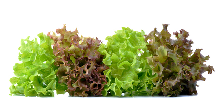 Red and green oak lettuce on white background.