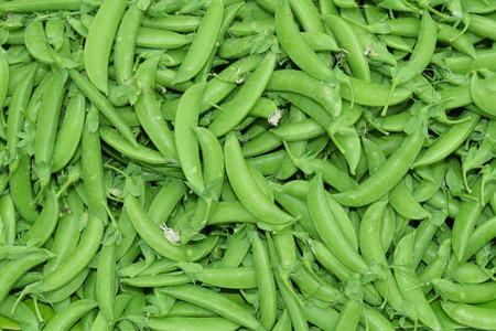 snap: Close up of sugar snap peas