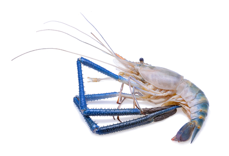 Fresh shrimp isolated on white background