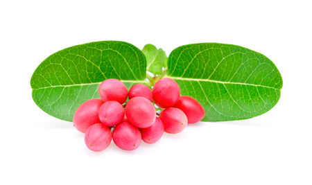 Karonda or Carunda Fruits, Tropical Fruits from Southeast Asia isolate on white