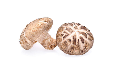 Shiitake mushroom isolated on white background